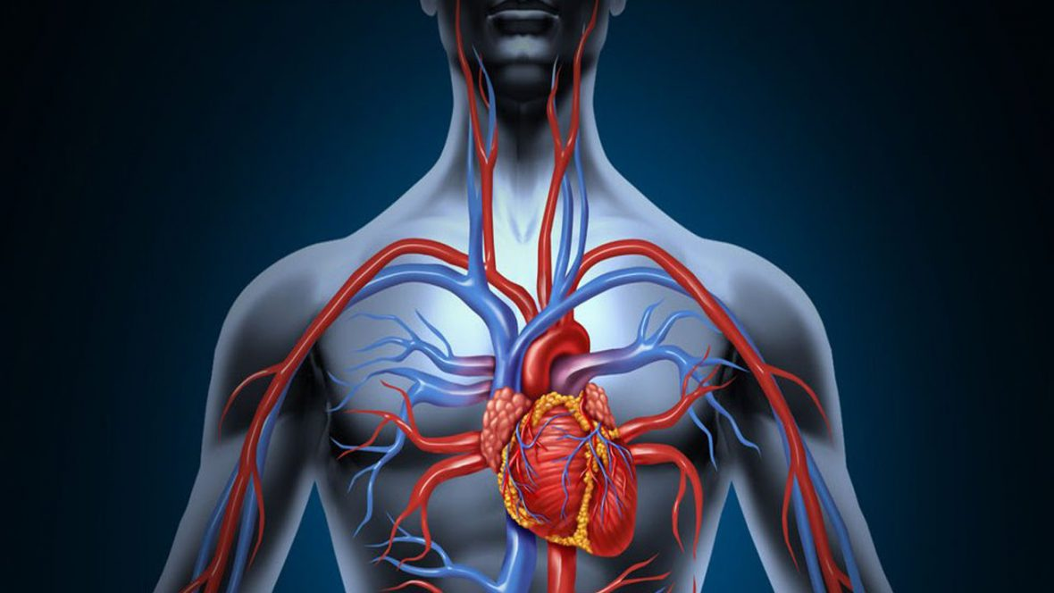 como-mejorar-la-circulacion-del-cuerpo