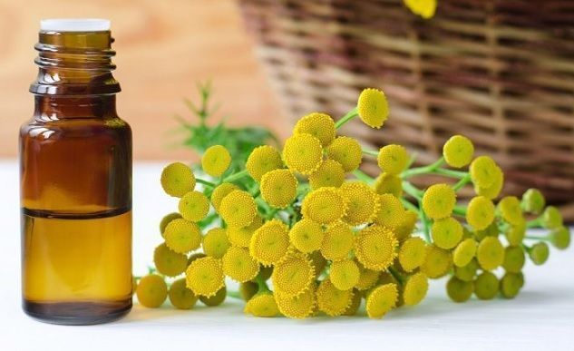 aceite-de-tanaceto-y-remedios-curativos